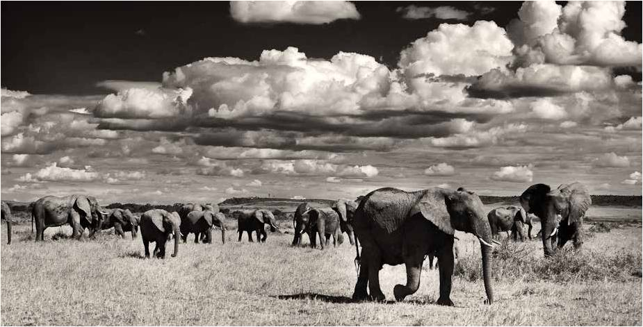 Conflicted lands in east Africa