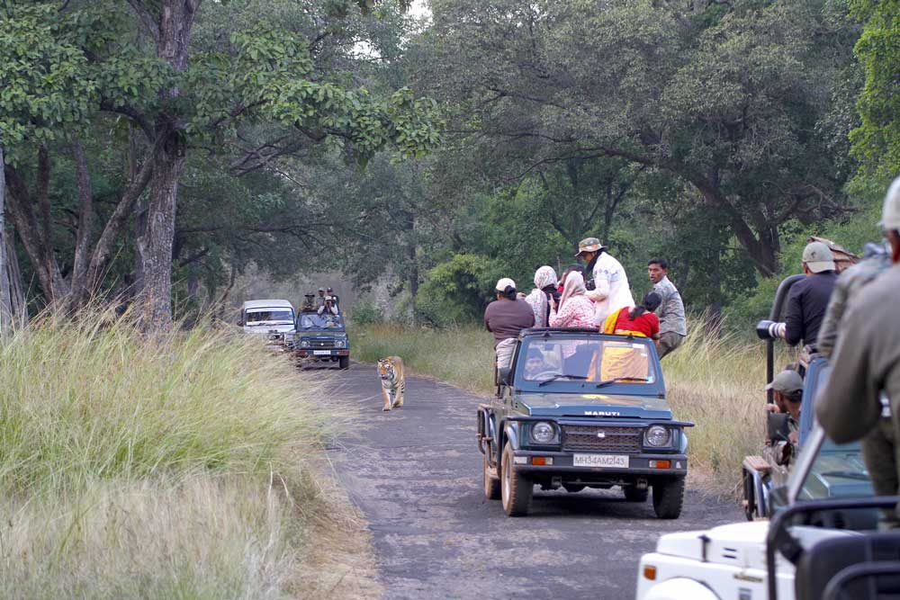 Sometimes it happens : How wildlife is thriving amongst India's booming population