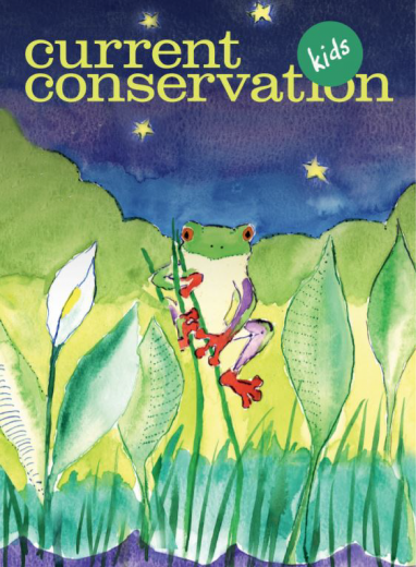 Current Conservation issue 12.3