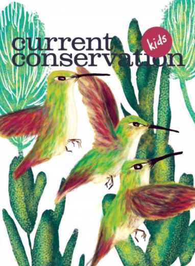 Current Conservation issue 13.1