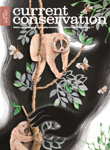 Current Conservation issue 14.1