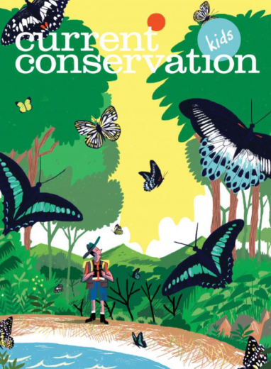 Current Conservation issue 13.3