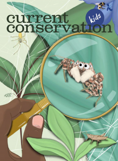 Current Conservation issue 13.4