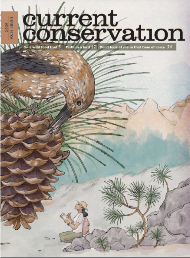 Current Conservation issue 14.3