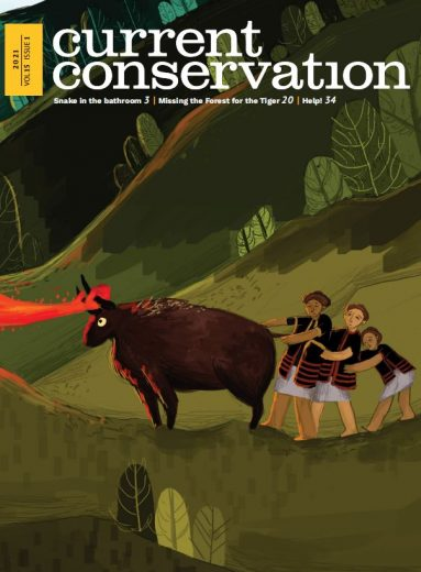 Current Conservation issue 15.1